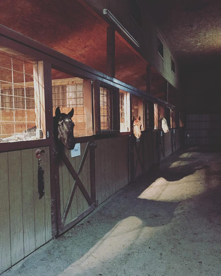 Horse Boarding - River's Bend Ranch